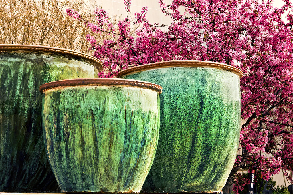 clay pots and cherry blossoms on national mall. Washington, DC
