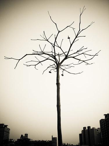 alone (by 小帽(Hat))