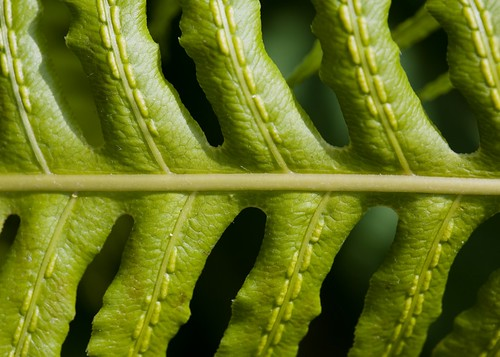 Fern with Stitching