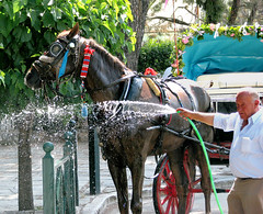 I guess it's not that warm. (Left Foot) Tags: summer horse water carriage kefalari kifissia