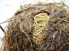 Bottom of nest