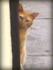 si? (: panti :) Tags: cat rosso gatto picnik