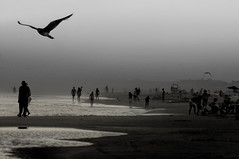 Apocalypse (noamgalai) Tags: sunset sea people bird beach water birds photography dawn photo newjersey sand apocalypse nj picture photograph shore end allrightsreserved   photomania  noamg noamgalai   wwwnoamgalaicom sitelandscapes    sitemain