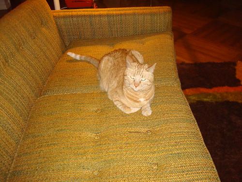 kitty carlisle