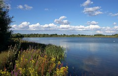 England: Bedfordshire Wetlands - Blue Day Flowers (Tim Blessed) Tags: uk trees sky nature water clouds reeds landscape scenery lakes wetlands ponds aplusphoto