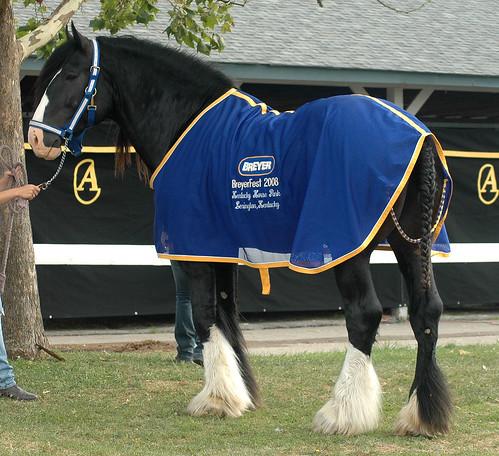 Many horses: 2697082712_61b83cd542