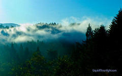 Coastal Fog Hugs the Redwoods - Redwood Natio