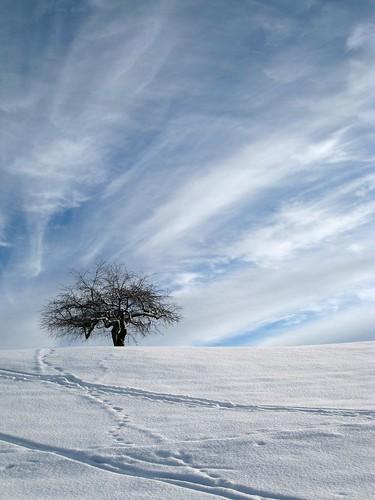 solitérní strom ve sněhu VÁnoce PF 2010