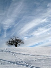 Touch the sky (Getty Images) (alles-schlumpf) Tags: blue schnee winter sky white snow signs tree nature sign clouds germany deutschland spur photo foto nieve natur picture spuren himmel wolken pic dani lookup cielo alemania groove marca invierno lonely impressions impressionen blau baum hint nube gettyimages einsam zeichen louisarmstrong allgu winterlandschaft winterimpressionen zitat potofgold weis zitate sprichwort digitalcameraclub naturepoetry colorphotoaward aufschauen platinumheartaward danielahartmann multimegashot 100commentgroup allesschlumpf danihartmann