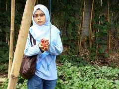 Hidayah also picks strawberry at Cihanjuang,Bandung, Indonesia.