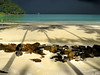 The arrival of a rainstorm (B℮n) Tags: thailand asia before topf300 palmtrees monsoon after topf100 500faves soe topf200 darkclouds andamansea kohkood topf400 topf500 paradisebeach amazingthailand fishersboat amazingview lonelybeach topf600 torrentialrain 100faves 200faves robinsoncrusoeisland thecalmbeforethestorm palmtreeshadows abigfave 300faves platinumphoto tropicalscene aplusphoto 400faves 600faves theperfectphotographer kohkut earthasia 5minuteslater islandkut turquoiseseaside bangboabay fisherboatsphotogenic goldenmasterpiece rainyseasoon thearrivalofarainstorm serenebeforethestorm robinsonexpeditie