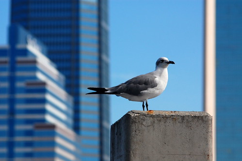 seagull against blue
