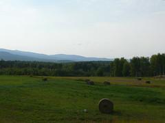 British Columbia, se han acabado los bosques y hay muchos campos con ganado en la ruta