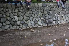 IMG_9672 (kurokojpn) Tags: japan tokyo orlando   saitama hidaka kuroko redspiderlily kinchakuda canon40d photosjapan kuroko01 kurokoshiroko photographytokyo photostokyo bestoftokyo tokyobest orlandojpn thetokyopost kurokojpn