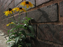 IMG_4771 (nuschu) Tags: florafauna