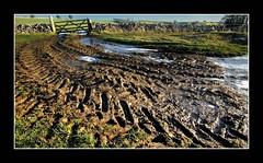 Gateway to Winter (Scippy) Tags: uk winter england tree ice field wall gate frost post mud derbyshire peakdistrict tracks aplusphoto vanagram
