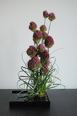 Ikebana 'Strings attached' (Otomodachi) Tags: flowers black flower grass japan japanese purple ikebana container loops gras chives zwart knots bloemen flowerarrangement lak paars bloem bogen japans knopen alium bieslook onionflower japaneseflowerarrangement steelgrass laquerware lakwerk bloemschikking schikking berengras