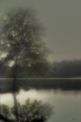 Dreamy Tree. Nellie Vin (Nellie Vin) Tags: landscape dreamytree fog morning light water lake soft nellievin negative film color luminism photography gallery tree calm sky weather 35mm print