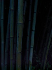 BAMBOO IN THE NIGHT (Chandra Siri) Tags: blue green night dark noflash zen karma colorless bluehue colourless shootinginthedark walkinginbeauty whengreenisblue