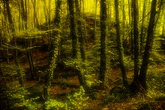 La Fageda d'en Jord (XIX) (Jose Luis Mieza Photography) Tags: espaa tree forest landscape arbol spain paisaje catalonia bosque catalunya soe catalua haya garrotxa bosc olot hayedo benquerencia flickrshop falleda abigfave reinante platinumphoto jlmieza artistictreasurechest lafalledadenjorda reinanteelpintordefuego joseluismieza