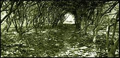 Hidden (Ricky rake) Tags: light shadow tree art nature leaves blackwhite path nj unioncounty watchungreservation ilovemypic excapture