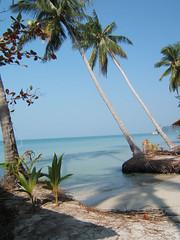 the beach (**Kanitta**) Tags: beach thailand palmtree fujifinepix
