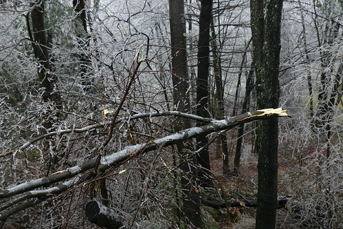 tree branch down