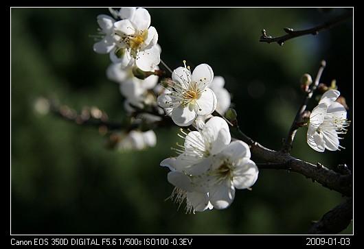 20090103F9清大梅園