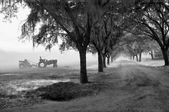 John Deere Tractor and the Avenue of Oaks (Sco C. Hansen) Tags: morning bw tractor tree sc fog landscape photo blackwhite oak southcarolina hansen beaufort johndeere beaufortcounty beaufortsc beaufortphotography