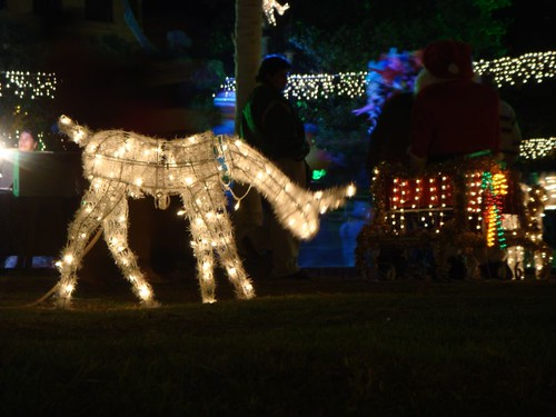 Xmas decorations in Riobamba...OMG!