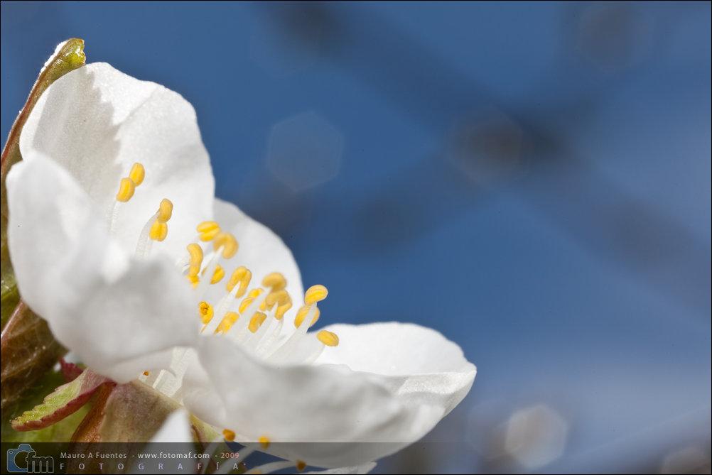 Flor-090409140411