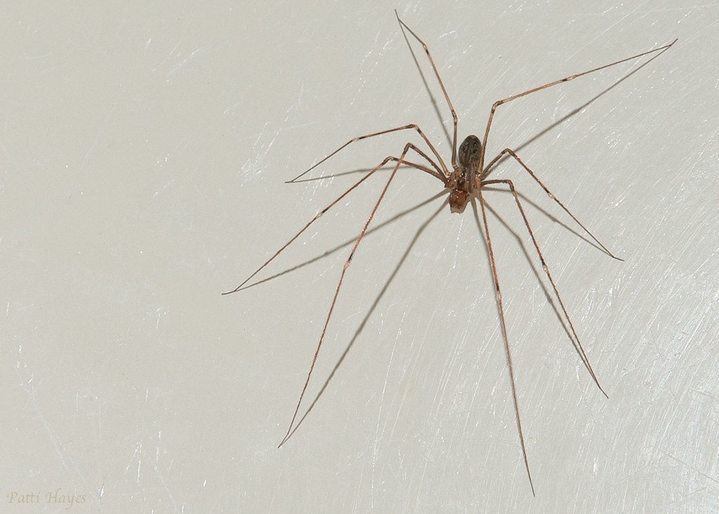 Arachnophobia 116/365