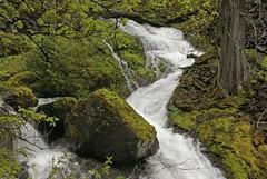 Water Finds Its Way (p medved) Tags: water forest waterfall washington agua eau hike bosque acqua cascade voda bosco listopad foresta cascata fallscreekfalls slapovi vodopad