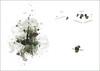 TP 1 - Metamorfosis (Andromsal) Tags: dg mancha signo uba fadu metamorfosis simetrías morfología