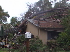 Large Tree fell into house during high winds