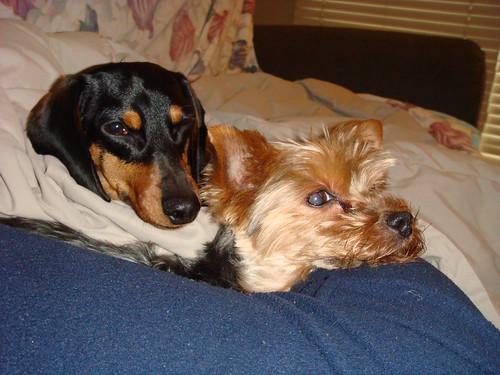 doggies at rest