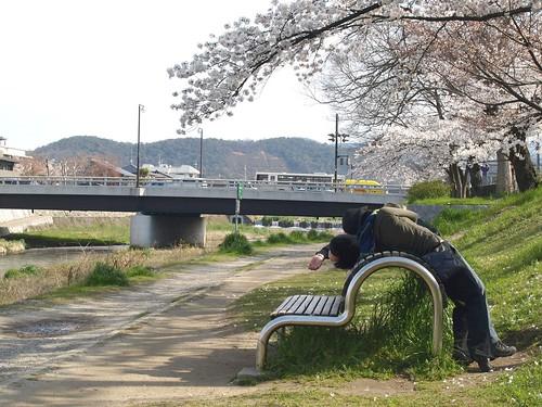 20080405 哲学の道・鴨川の桜 104