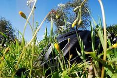 helmet and flowers (Francesco [francepics]) Tags: flowers grass nikon helmet meadow erba fiori tamron prato casco olivetree emozioni olivi 17mm d40x