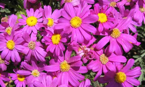 Lots o' flower