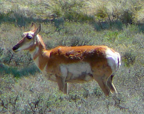 Wild life in Bryce Canyon, Utah
