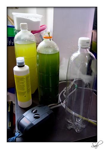 Technique d'élevage pour artemias et phyto-plancton. 2572717520_b8e9351d8e