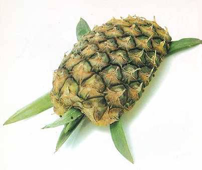 pineapple turtle