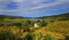 Lago Arvo (sinnomore) Tags: parco canada casa aperture natura giallo algo acqua calabria sila ginestra cosenza arvo lorica naturale sigma1020 nikond200 ginestre lagoarvo