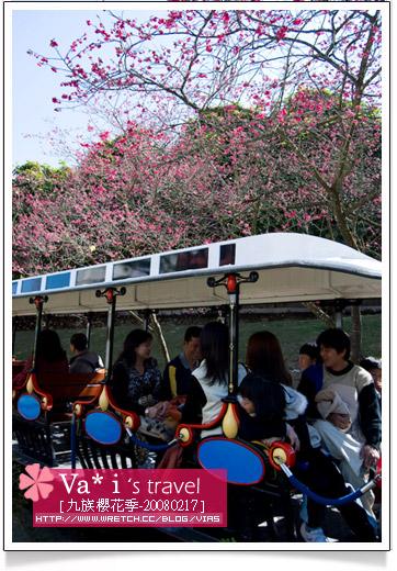 【2008九族櫻花季】九族文化村之旅-九族櫻花季