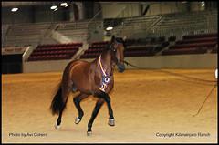 fiesta-2006-011 (kilimanjaroranch) Tags: horse demonstration pre equestrian stallion andalusian dressage spanishhorse fiestaofthespanishhorse