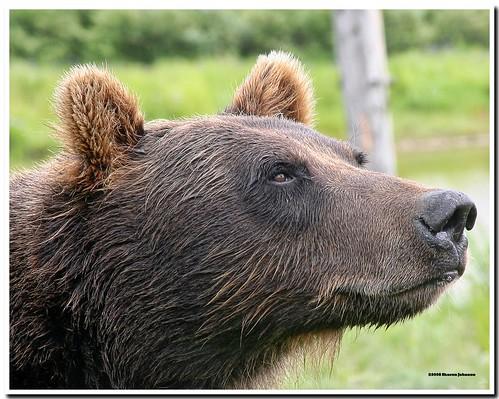 I Smell Moose!