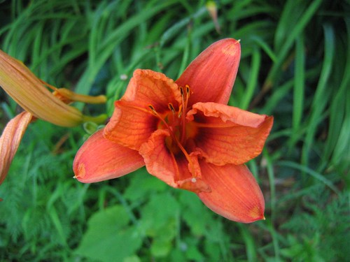 Missile base lillies