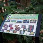 Foster Botanical Gardens Midsummer Night's Gleam thumbnail