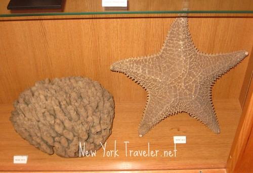 Large Sponge and Starfish