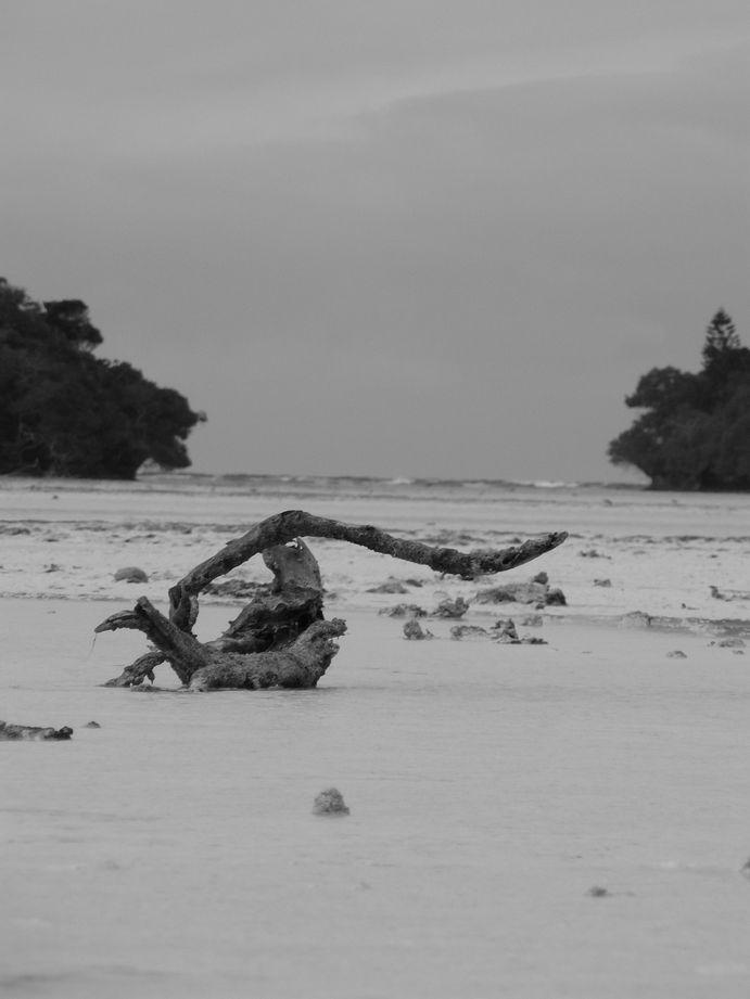 Ile des Pins 2008 #123